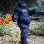 原西ゴリラのPPAP(PGGP)の動画!ハワイでもモニタリング!